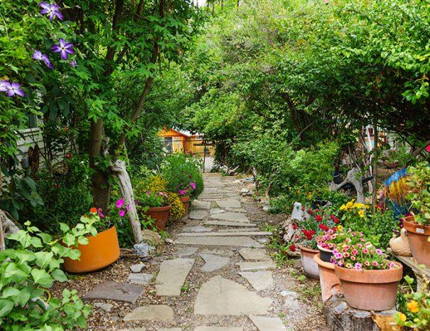 June-Garden-Towards-Gate-800